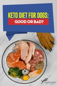 The Guide to Keto Diet for Dogs - Is It Good or Bad