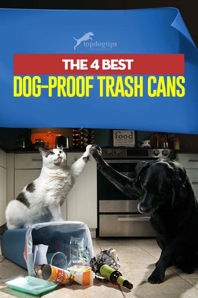 Top 4 Best Dog-Proof Trash Cans