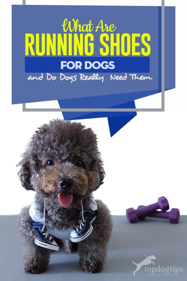 What Are Running Shoes for Dogs and Do Dogs Really Need Them - The Guide
