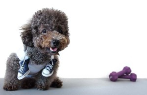 What Are Running Shoes for Dogs and Do Dogs Really Need Them