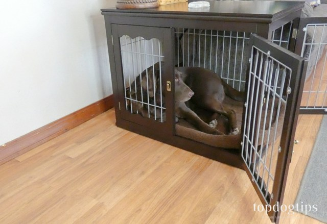dog in crate