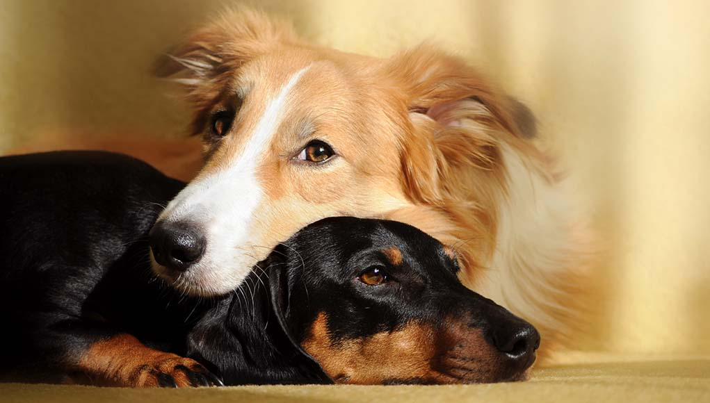 14 Benefits of Spaying and Neutering Your Dogs