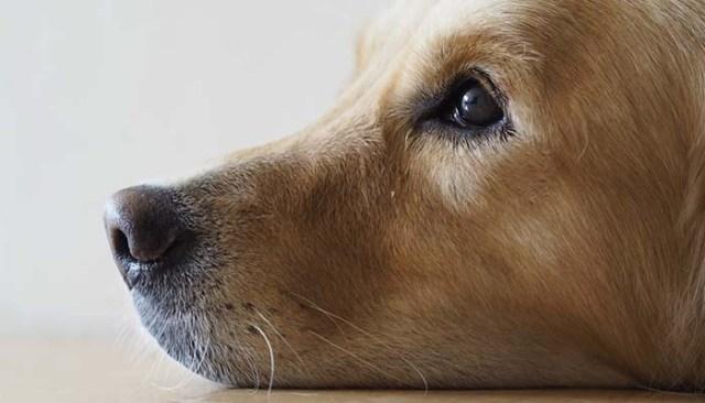 Causes of Dog Depression