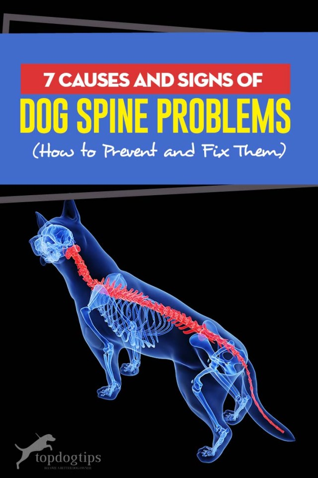 Common Causes of Dog Spine Problems