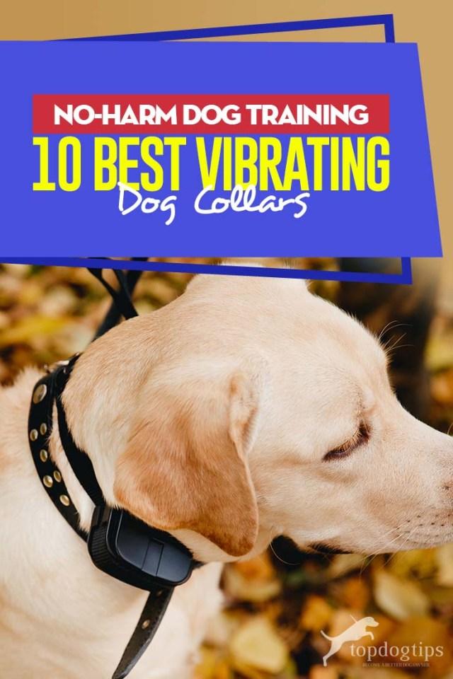 Top 10 Best Vibrating Dog Collars