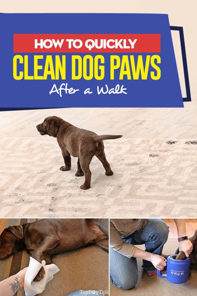 Video Guide - How to Clean Dog Paws After a Walk