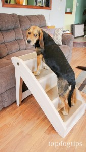 Why Dog Stairs are a Necessity
