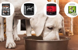 Muscle Builder for Dogs - What It Is and How to Use It