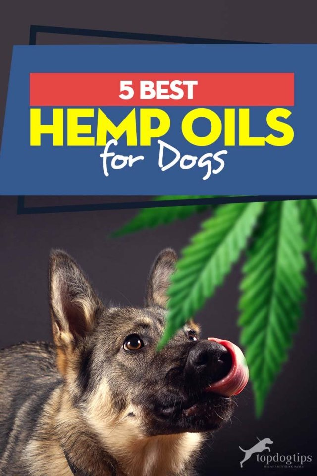 My 5 Favorite Hemp Oil for Dogs Treatments