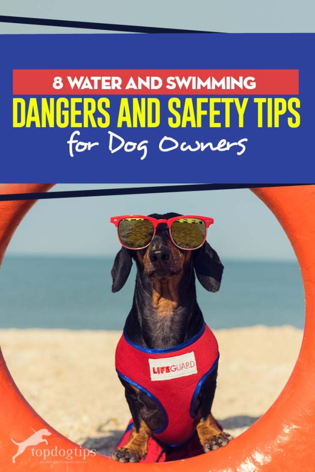 The 8 Water and Swimming Dangers and Safety Tips for Dog Owners