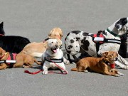 Therapy Dogs vs Service Dogs - What's the Difference