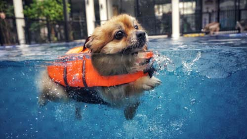 Water and Dog Swimming Safety Tips