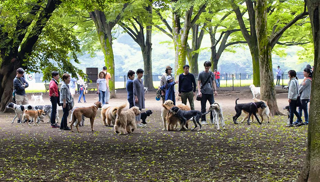 4 Reasons Why and When Dog Parks Can Be Dangerous