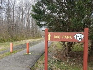 Crowded, Poorly Structured Fenced Dog Parks