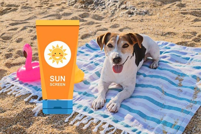 Is Sunscreen for Dogs Safe to Use