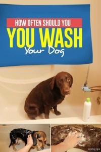 Tips on How Often Should You Wash Your Dog