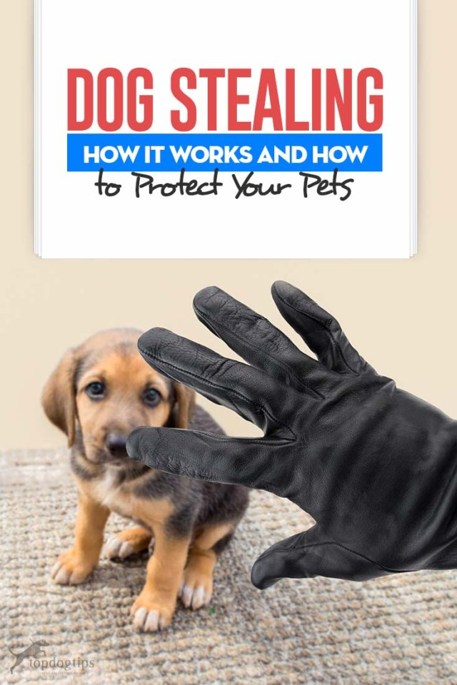 Dog Stealing and How It Works and How to Protect Your Pets