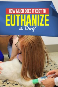 How Much Does It Cost to Euthanize a Dog