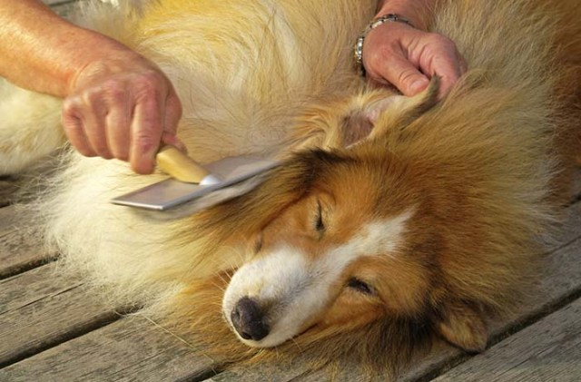How to Get Rid Of Dandruff on Dogs