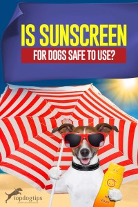 Is Sunscreen for Dogs Safe to Use - Best Tips