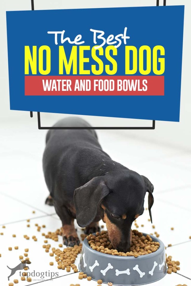 Top Best No Mess Dog Water and Food Bowls