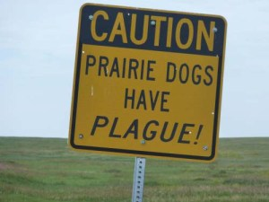 What Is the Plague in Dogs