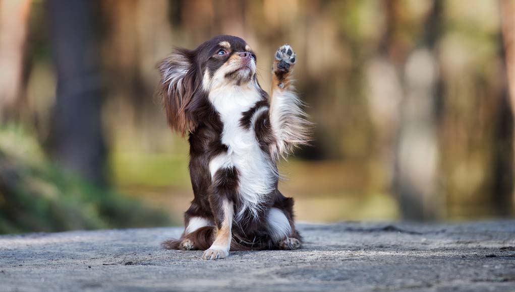 6 Advanced Dog Tricks for Owners to Teach Their Dogs