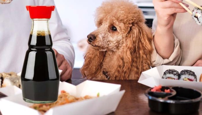 Can Dogs Eat Soy Sauce