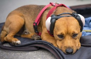 The Best Dog Hearing Protection