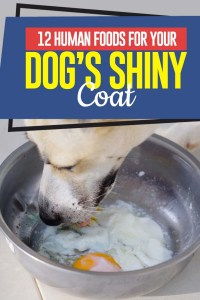 Top 12 Human Foods for Dog's Shiny Coat