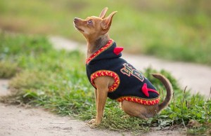 12 Best Dog Coats and Sweaters to Prepare You for the Fall