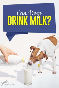 Can Dogs Drink Milk and What You Must Know