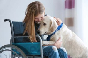Can I Use My Pet as a Service Dog