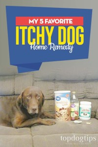 My 5 Favorite Itchy Dog Home Remedy