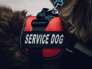 Service Dog Under Law