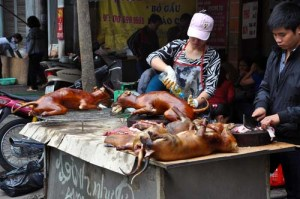 Street food seller selling a grilled dog barbecue