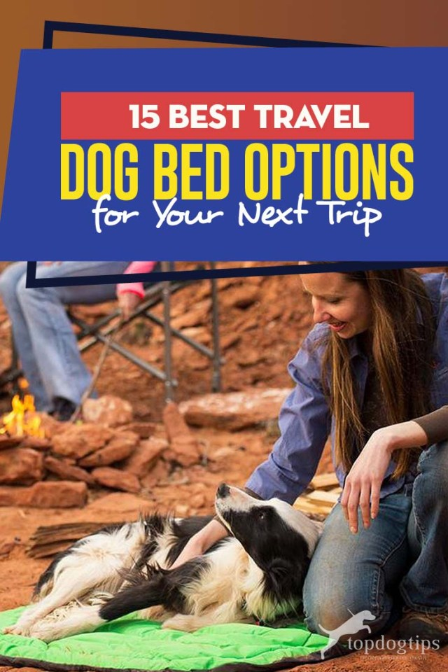 The 15 Best Travel Dog Bed Options for Your Next Trip