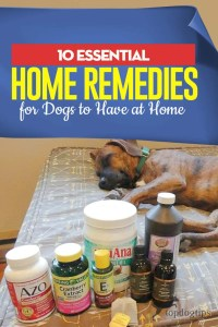 Top 10 Essential Home Remedies for Dogs to Have at Home