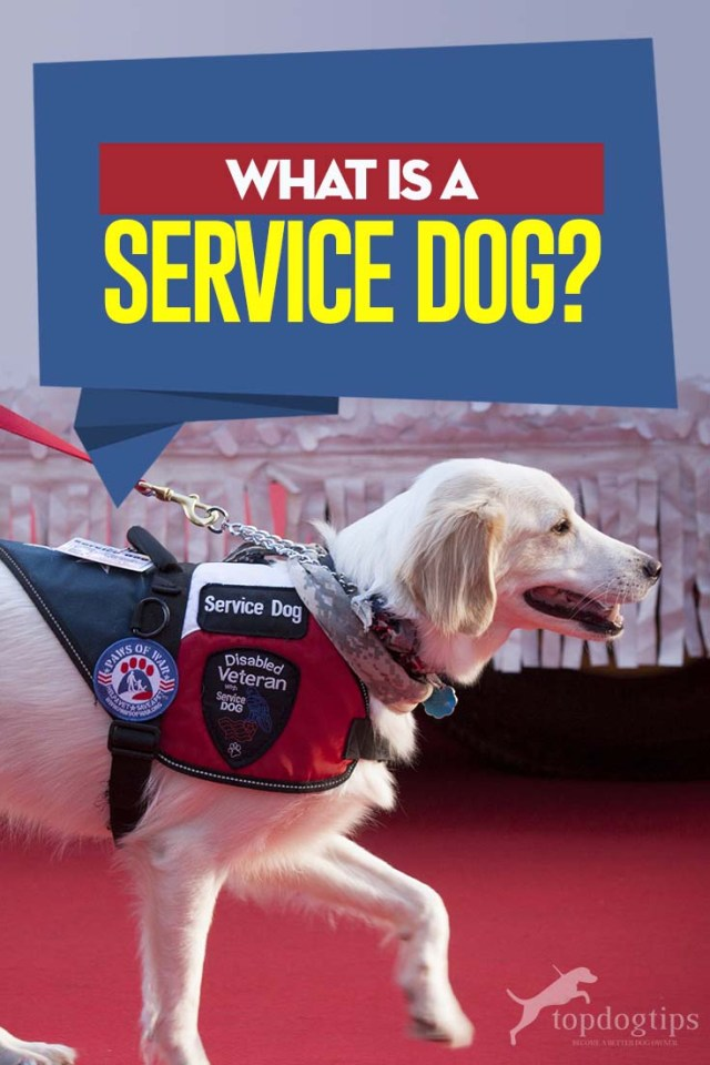 What Is a Service Dog