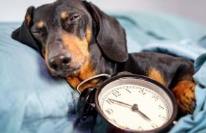 4 Good Reasons Why Your Dog Needs a Routine