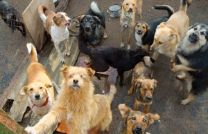 Animal Hoarding - What You Must Know