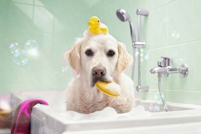 Best Whitening Shampoo for Dogs