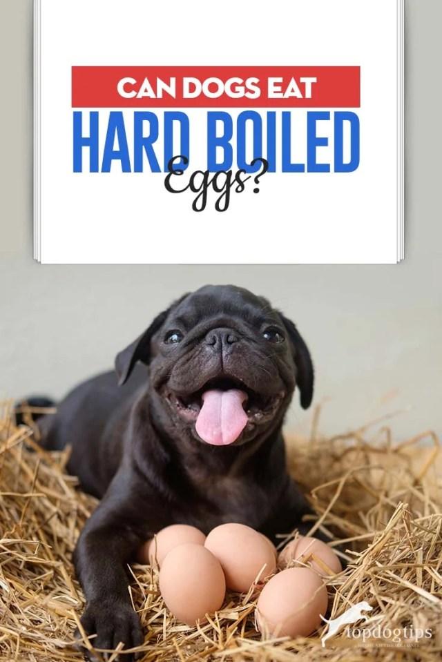 ¿Pueden los perros comer huevos duros y por qué?