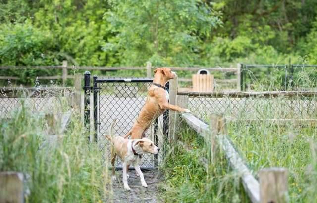 Dog Yard Escape Prevention