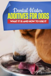 Guide on Dog Dental Water Additive - Here's What It Is and How to Use It