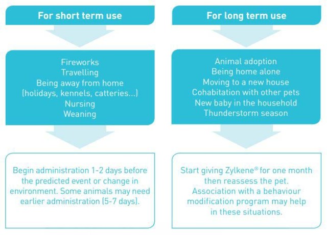 Short term and long term use of Zylkene for dogs