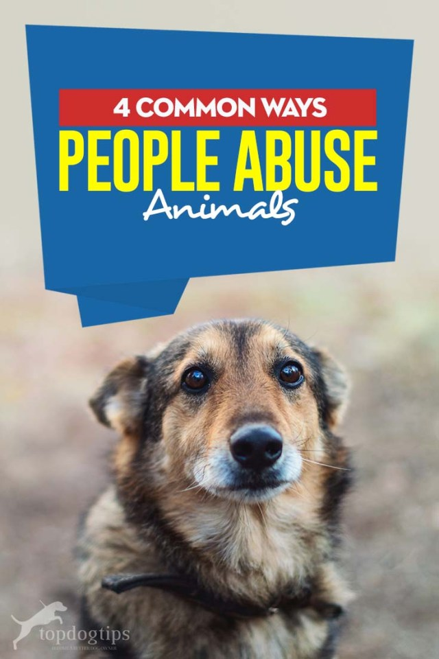 The 4 Common Ways People Abuse Animals