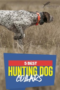 The 5 Best Hunting Dog Collars