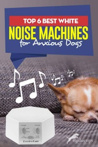 The 6 Best White Noise Machines for Dogs and Their Anxiety