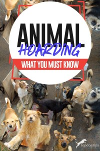 The Guide on Animal Hoarding What You Must Know